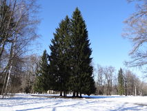 Pavlovsk公园 Pavlovsk 圣彼德堡 俄国 免版税库存照片