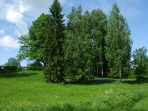 Pavlovsk大绿色树在森林里 免版税库存图片