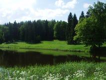 Pavlovsk湖森林和花在夏天 免版税库存图片