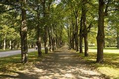 Pavlovsk Kalkallee stockbilder