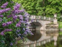 Pavlovsk Park royalty free stock photo