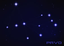 Pavo constellation Stock Photos