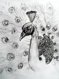 Pavo real dibujado mano Fotografía de archivo libre de regalías