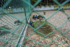 Pavo real en el parque foto de archivo