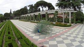 Pavo real en parque español