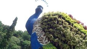 Pavo real gigante Fotografía de archivo libre de regalías