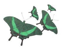 Pavone della farfalla Immagini Stock