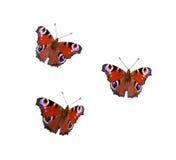 Pavone-farfalla Fotografie Stock Libere da Diritti