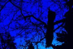 Pavone sull'albero Immagini Stock
