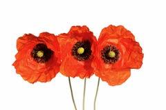 pavot de fleur Image stock
