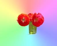 Pavot - la fleur avec beaucoup de significations autour du monde Photos libres de droits