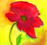 Pavot rouge Photo libre de droits