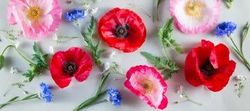 Pavot rouge et rose et bleuet bleu sur un fond vert clair Drapeau des fleurs Background Photo libre de droits