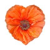 Pavot rouge sous forme de coeur Image stock