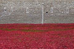 Pavots à la tour de Londres Image stock