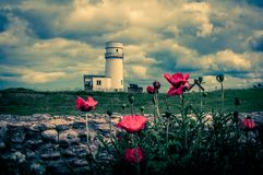 Pavots au vieux phare de Hunstanton images libres de droits