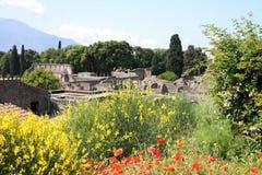 Pavots aux ruines de Pompeii en Italie photo libre de droits