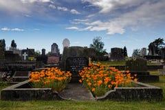 Pavots californiens sur une tombe image libre de droits