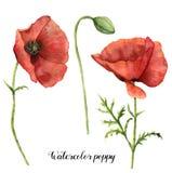 Pavots d'aquarelle réglés Illustration florale peinte à la main avec les feuilles, la capsule de graine et les branches d'isoleme Images libres de droits