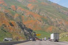 Pavots de Californie en pleine floraison, passage de Tejon Images stock