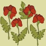 Pavots de fleur Photos stock