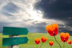 Pavots et herbe avec le signe. Image libre de droits