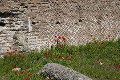 Pavots et ruines Image stock