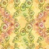 Pavots - fleurs et bourgeons Photographie stock libre de droits