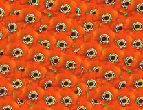 Pavots oranges Images stock