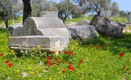 Pavots rouges dans les ruines romaines Photos libres de droits