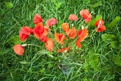 Pavots rouges dans un vase se tenant dans l'herbe verte Photographie stock