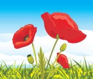 Pavots rouges de floraison sur un paysage Photo stock