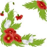 Pavots rouges et papillons blancs Photographie stock