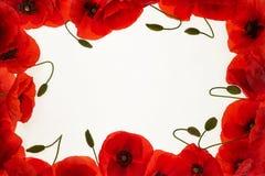 Pavots rouges sur un fond blanc, cadre images libres de droits