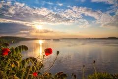 Pavots sur Danube Photos libres de droits