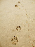 Paw Beach. Paw prints of a dog at the beach stock photos