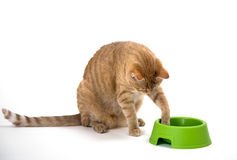 Paw in the bowl Stock Photos