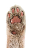 Paw Stock Images