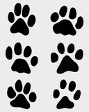 Paw of cats Stock Image