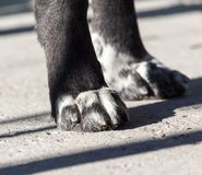 Paw dog on the nature. In the park in nature Stock Photography