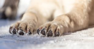 Paw dog on the nature Stock Photography