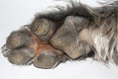 Paw of dog. On white background Stock Photo