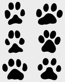 Paw of dogs Royalty Free Stock Photography