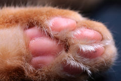 The paw of the ginger cat Royalty Free Stock Images