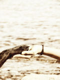 Paw in hand (19). Paw in hand human hand and dog paw Royalty Free Stock Photography