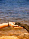 Paw in hand (15). Paw in hand, human hand and dog paw Stock Photos
