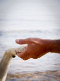 Paw in hand. Paw in hand, human hand and dog paw Stock Photo