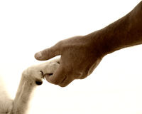 Paw in hand (20). Paw in hand, human hand and dog paw Stock Photos