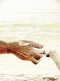 Paw in hand (21). Paw in hand, human hand and dog paw Royalty Free Stock Photos