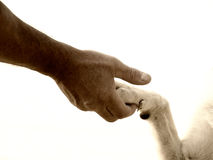 Paw in hand (12). Paw in hand human hand and dog paw Stock Photos
